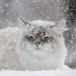 Лайфхаки от Школы Автозвука: как эксплуатировать аудиосистему зимой